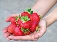 Рассада клубники садовой: 6 причин
