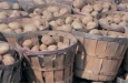 Картошка – второй хлеб на Руси