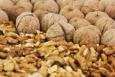 Грецкие орехи предотвращают развитие слабоумия