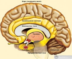 Музыкально одарённый мозг