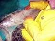 Рыболовные сети и их производство