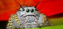 Пауков будут доить ради биоинсектицидов