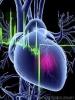 Сердцу нормально сокращаться помогают шесть  белков