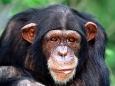 Людям с ограниченными возможностями будут помогать обезьяны