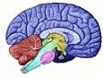 Поиски тайны в отношениях между разумом и материей продолжаются
