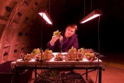 Гигантская подземная ферма на глубине 30 метров под Лондоном