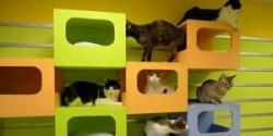 Кошачья гимнастика