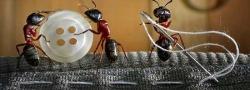 Лучшие способы борьбы с домашними муравьями