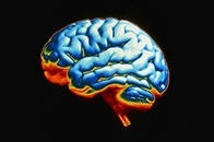 """Свобода воли может быть следствием """"фоновых помех"""" в мозге"""